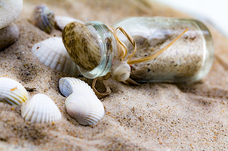 message in a bottle, mussels, bottle, sand, beach, glass bottle, holiday