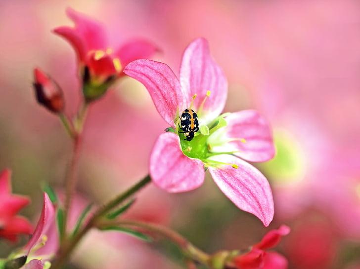 растителна, природата, на живо, цвете, насекоми, едно животно, животните дивата природа
