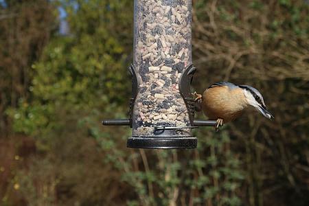nuthatch, feeder, garden, bird, nature, avian, wild