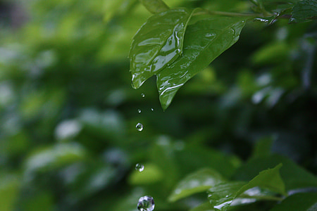 planta, gotetes d'aigua, bodegons