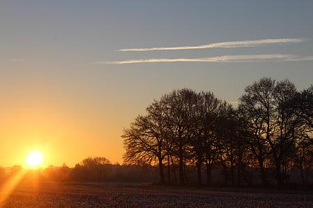 Alba, l'hivern, sol, arbre, paisatge, morgenstimmung, cels