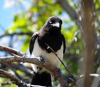 branch, bird, birds, animals, fauna