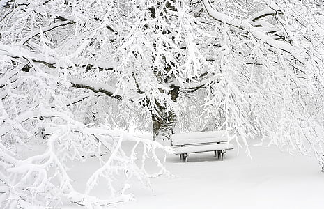 Banc, fred, boira, muntanya, neu, arbre, l'hivern