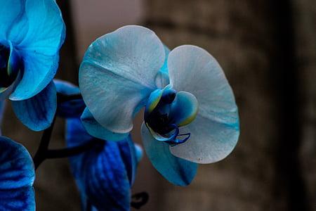 Orquidea, lill, Orchid, Aed, eksootiliste taimede, taim, lilled