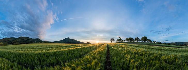 field, landscape, sunset, summer, nature, cereals, barley