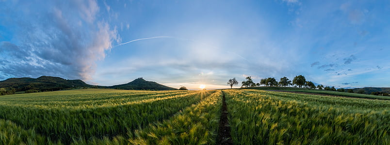field, landscape, sunset, summer, nature, cereals, barley