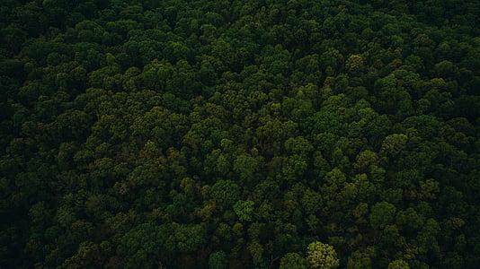 Zelená, Leaf, stromy, rastlín, Príroda, Forest