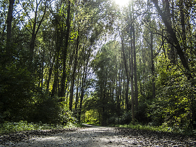 forest, road, trees, forest road, mystic, light and shadow, nature