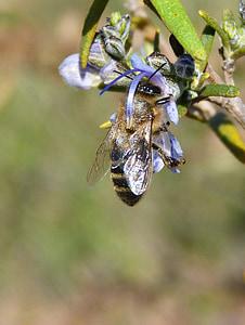 abella, romaní, Libar, xuclar