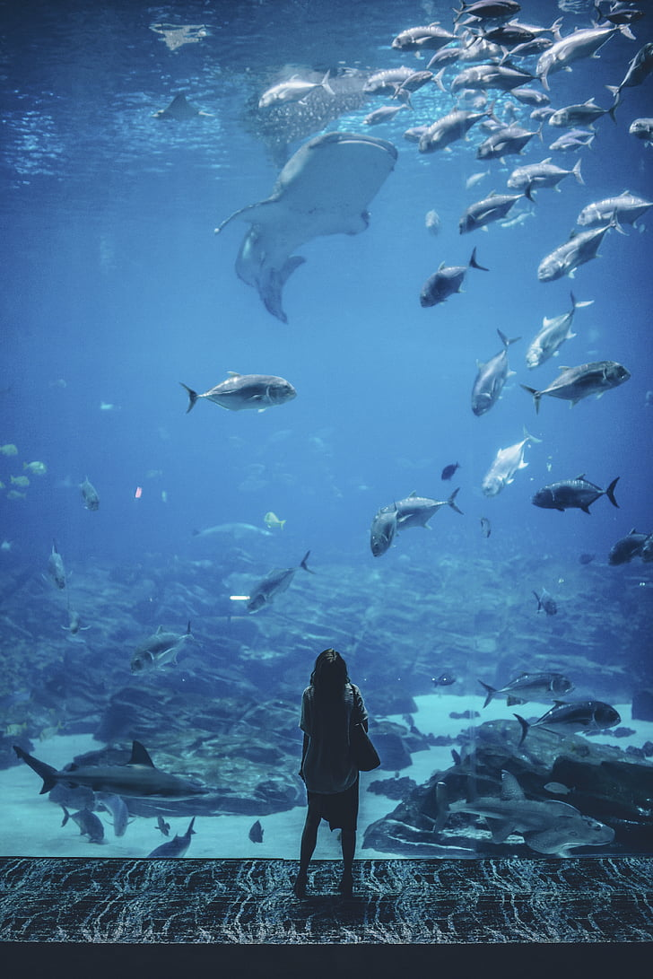 Luonto, waterr, ihmiset, nainen, vaeltaa, Yksin, akvaario