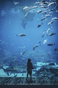 natura, waterr, persones, dona, vagar, sol, Aquari