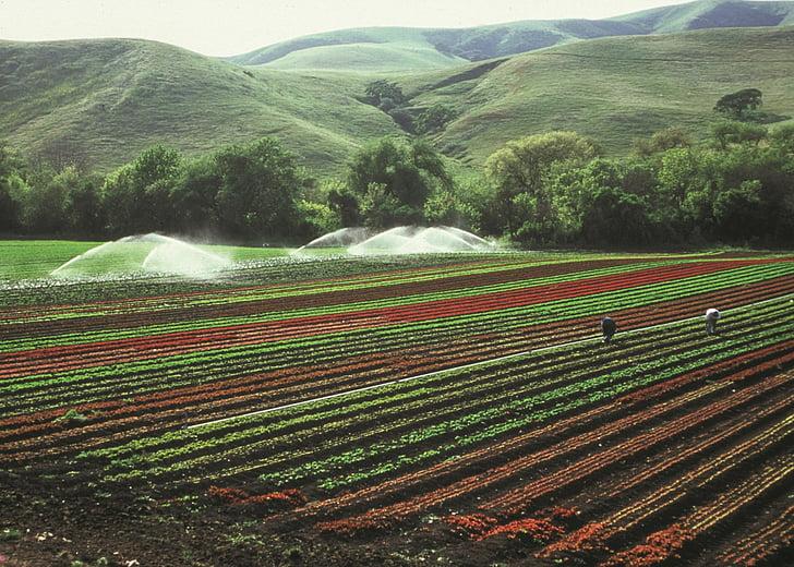 l'agricultura, cultius, reg, camp, l'agricultura, plantacions, cultiu