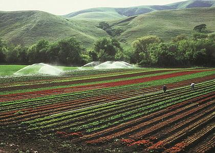 Селско стопанство, култури, напояване, поле, земеделие, насаждения, отглеждане