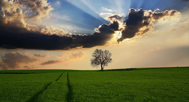 countryside, tree, landscape, sunlight, nature, sky, field