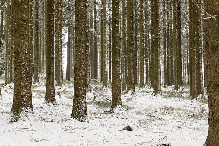 krajine, pozimi, sneg, gozd, hladno, dreves, zimske sanje
