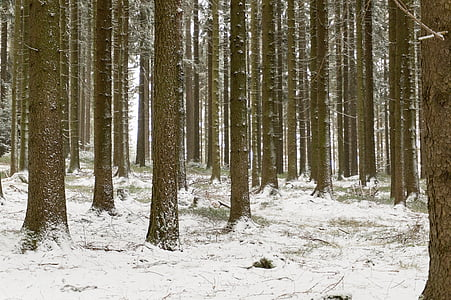 landscape, winter, snow, forest, cold, trees, winter dream