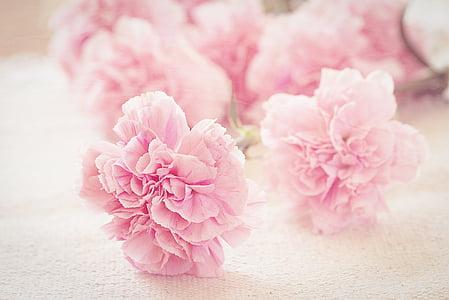 claus d'espècia, flors, pètals, Rosa, romàntic, schnittblume, tancar