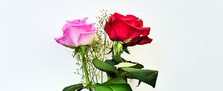 roses, flowers, pink rose, pink, blossom, bloom, rose blooms