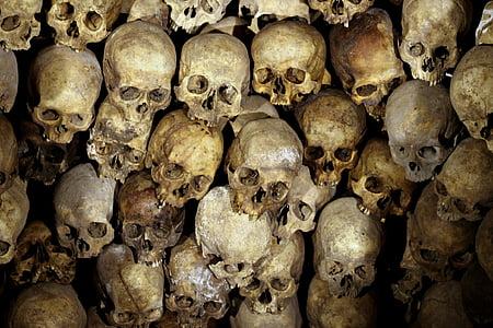 skeleton, head, bones, people, human skull, human skeleton, healthcare and medicine