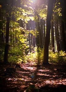 forest, sunbeam, glade, autumn, nature, autumn forest, morgenstimmung