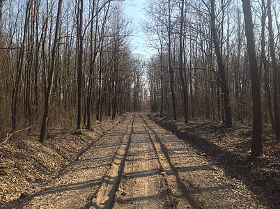 spring, road, dusty road, muddy road, dirt road, forest, nature