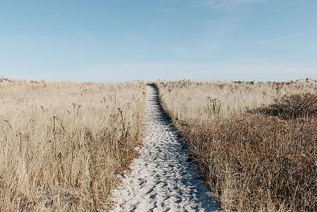 Prada, camí, camp, escèniques, natural, aventura, desert