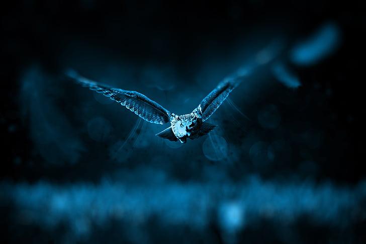 owl, hunt, nature, hunter, predator, animal world, animal