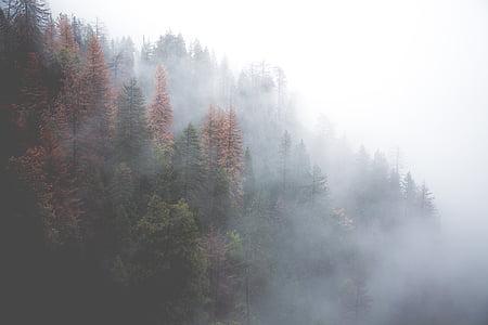 ліс, туманні, Природа, дерева, туман, Туманний, Мряка