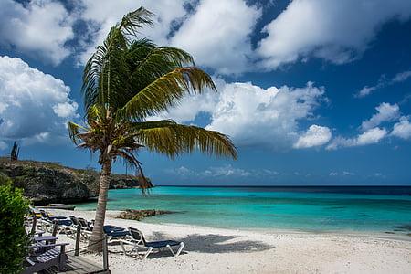 пляж, Palm, Тропічна, відпочинок, літо, море, Природа