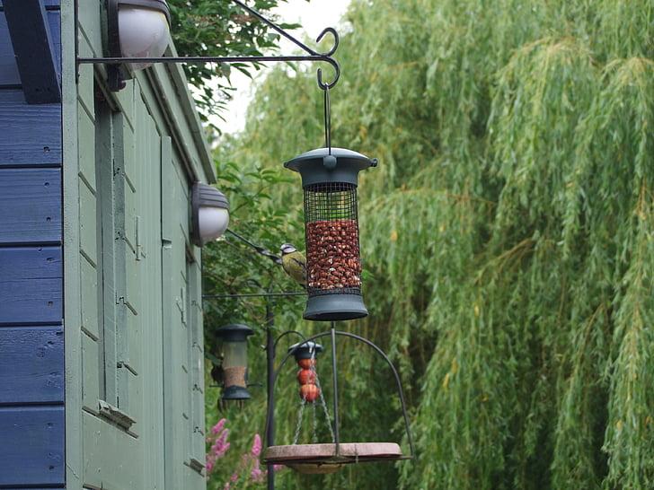 feeder, feeding birds, feeding
