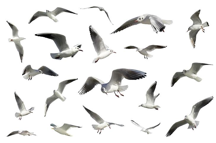 madarak, sirályok, madarak