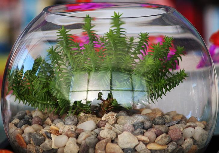 recipient de vidre, planta, pedres, reflectint, verd