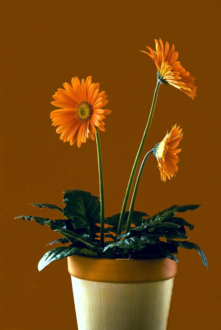 bodegons, flor, natura, flors, planta, satisfacció