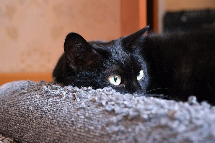 black cat, scratching posts, cat looking, cat, cat dreams, cat is, pet