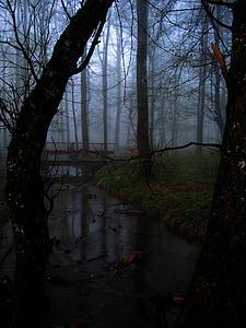 forest, fog, tree, glade, bach, bridge, atmosphere