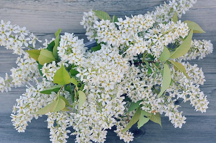 liliowy, oddziały, kwiaty, biały, gałąź kwiat bzu, białe kwiaty, wiosna