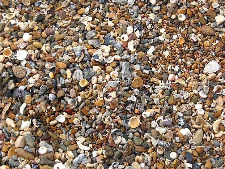 petxines, platja, Shelly platja, riba, costanera, closca