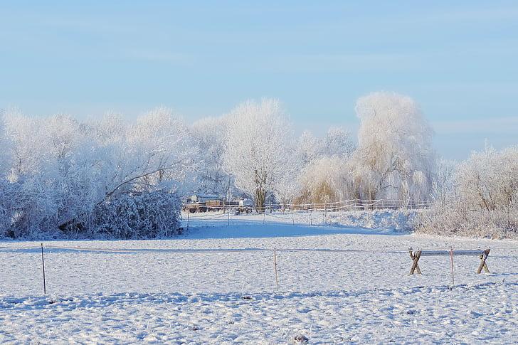 paisatge, arbres, Banc, impressions d'hivern, hivernal, neu, fred