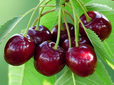 csomó, kerek, piros, gyümölcsök, nyári, fa, cseresznye