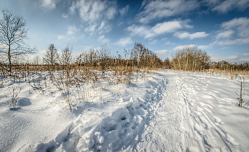winter, snow, tree, nature, landscape, view
