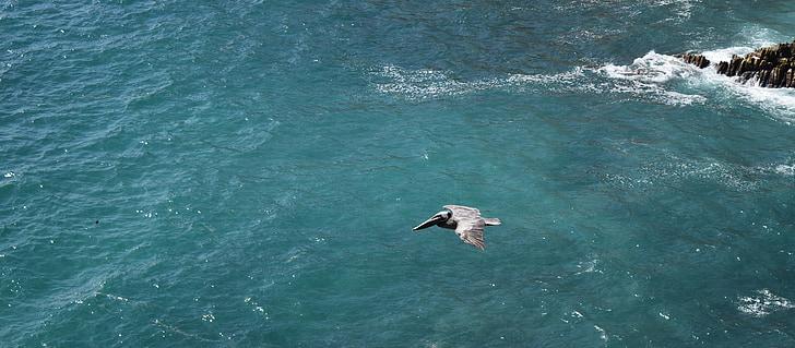 Ocean, lind, Pelican, Vaikse ookeani, Sea, vee, looma