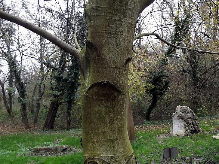 drevo, Forest, ORL, jeseň, tváre, Príroda