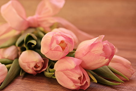 tulipes, Tulipa, flors, schnittblume, Tulipa de cria, primavera, primer bloomer