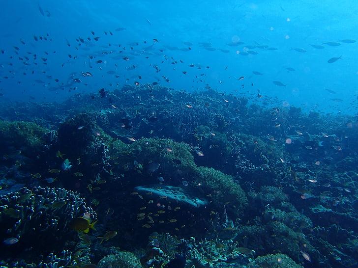 ryby, more, Ocean