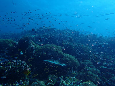peix, Mar, oceà