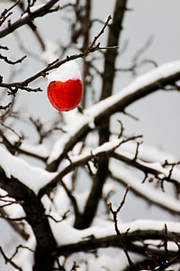 apple, winter, snow