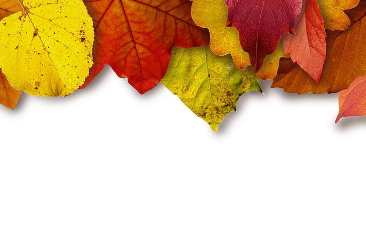 листа, цветни, цвят, жълто, червен, кафяв, Есенни листи