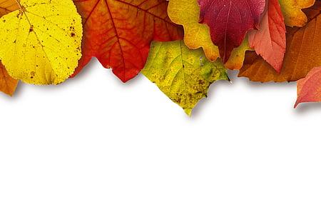 pozostawia, kolorowe, Kolor, żółty, czerwony, brązowy, Spadek liści