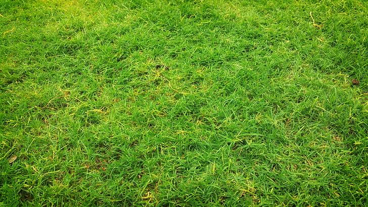 το πεδίο, χλόη, χόρτο πεδίο, Οικόπεδο χλόη, χορτολιβαδικές εκτάσεις, πράσινο, πράσινο γρασίδι