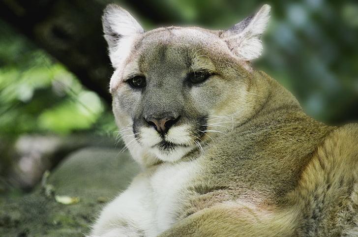 zdarma online seznamky jelenů